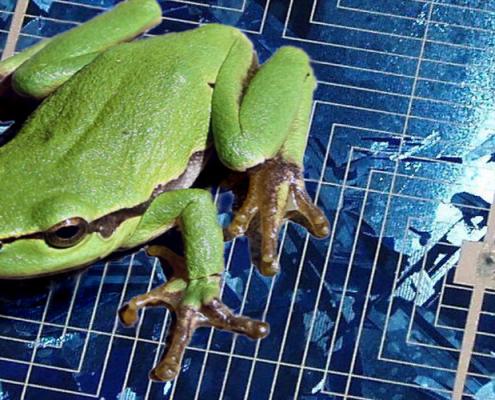 1200-500-frosch-auf-herdplatte