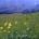 logwiese-auf-ag-gruenden